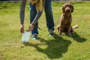 breach over dog poo