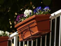 hanging plants on balcony