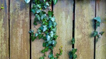 ACT: Q&A Who pays for fence replacement?