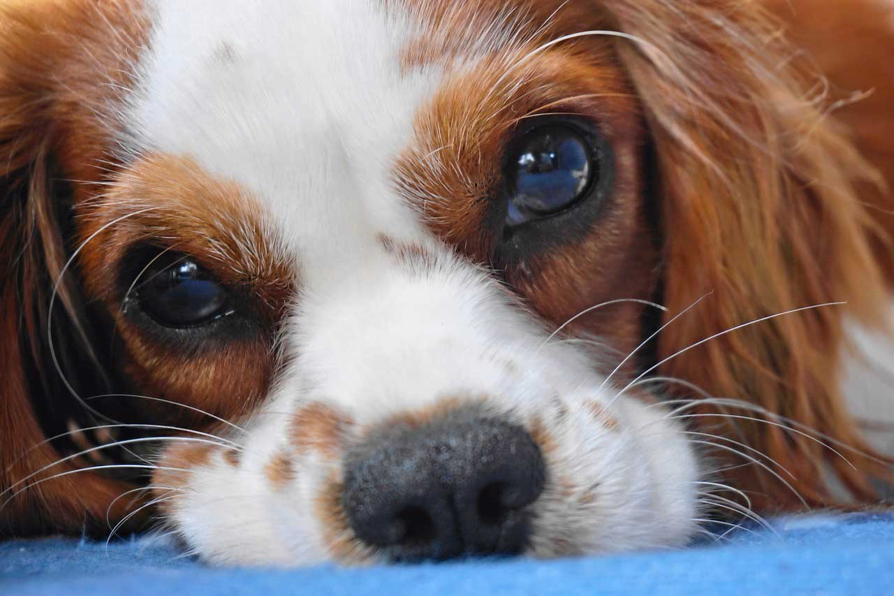 NSW: Confirmed! The Tribunal will overrule strata pet bans